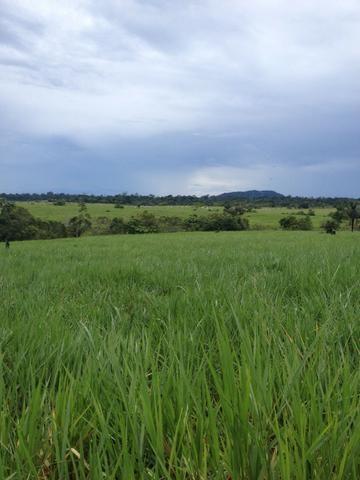 Fazenda de 606 hectares, S. Joao da Baliza De porteira fechada. ler descrição do anuncio - Foto 12