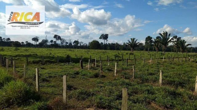 Fazenda com 140 Hectares em Candeias do Jamari/RO à venda, a 14 km da cidade - Foto 4