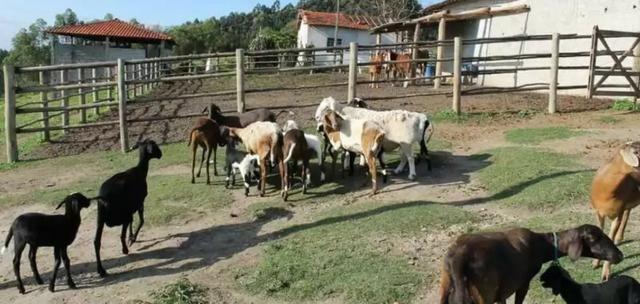 Fazenda Guararema- Salesópolis - Foto 12
