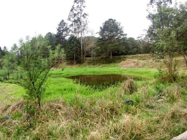 Fazenda em Campo Largo Bairro São Silvestre - Foto 13