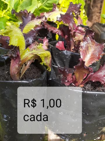 Mudas de hortaliças, e suculentas plantas em geral - Foto 6