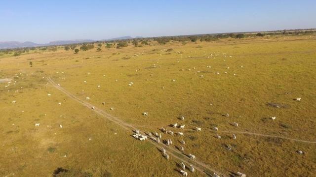 Fazenda 10593 hectares, sendo 7370 formado, terra de cultura
