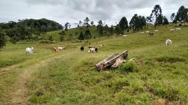 Fazenda anitápolis - Foto 12