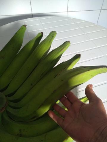 Mudas d banana
