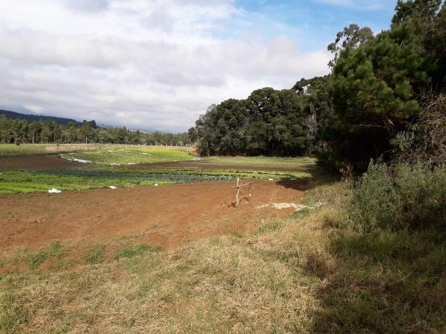 Chácara com 39.631m2 em Campina Grande do Sul - Aceito Imóvel Com Volta