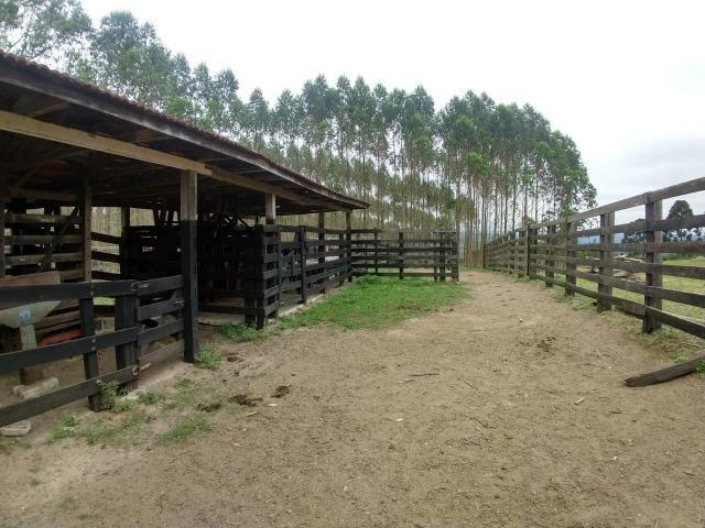 Fazenda em Campo Largo Bairro São Silvestre - Foto 19