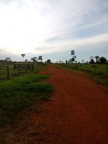 Fazenda 15000 hectares em vila bela, ha 60 km ponte e Lacerda - Foto 4
