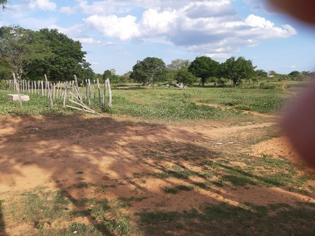 Vendo fazenda em crateus ce ou troco - Foto 2