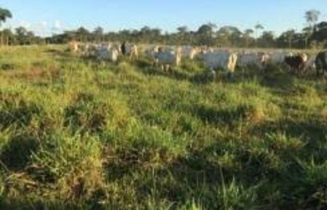 Área de terra com 20 hectares com 80 de pasto - Foto 4