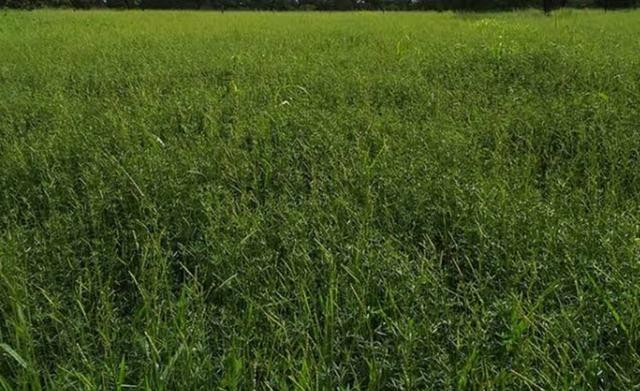 Área de terra com 20 hectares com 80 de pasto - Foto 3
