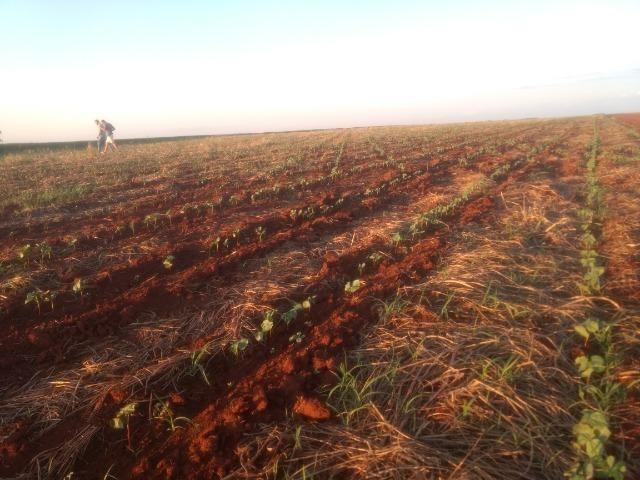 Alugo Fazenda p Arrendamento no Ms 1000 há - Foto 14