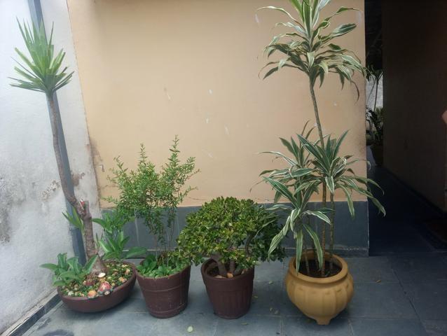 Plantas a partir de 50 reais ate mil reais a unidade - Foto 2