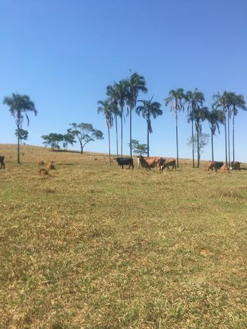 Fazenda caruru Valor R$ 1,400,000 - Foto 18