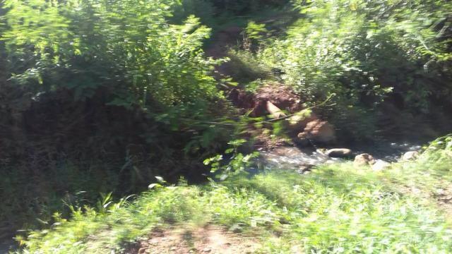 Sítio de 5 alqueires em Taquaral GO - Foto 4