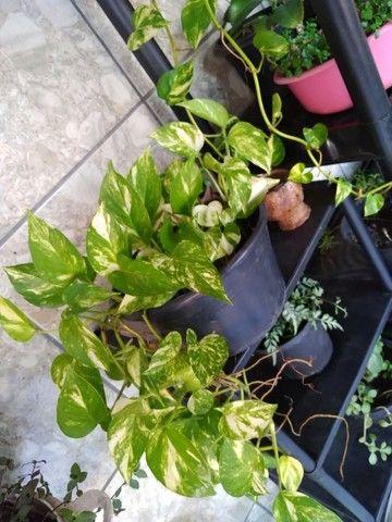 Plantas - Foto 3