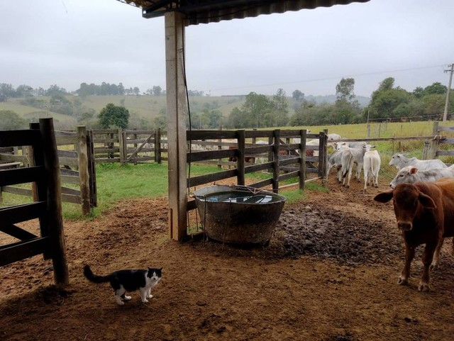 Sítio, Chácara, Fazenda a Venda com 72.600 m², 3 Alqueires, Leiteria, Casa como 2 quartos - Foto 12