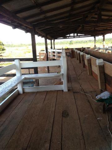 Fazenda de 606 hectares, S. Joao da Baliza De porteira fechada. ler descrição do anuncio - Foto 10