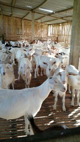 Fazenda em Paraibuna - Foto 8