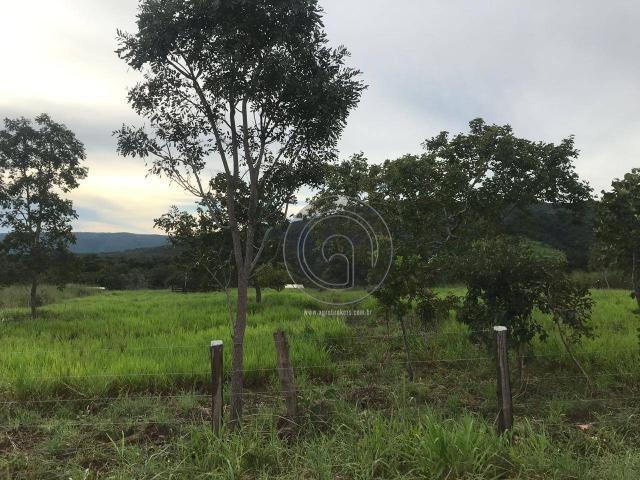 Sítio 11,8 ha na região distrito da guia - Foto 10