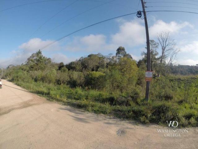 Área à venda, 5000 m² por r$ 800.000 - borda do campo - são josé dos pinhais/pr - Foto 3