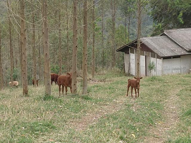 Fazenda em Campo Largo Bairro São Silvestre - Foto 5