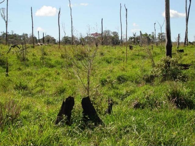 Fazenda região de Juara F0022 - Foto 2