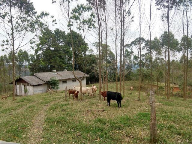 Fazenda em Campo Largo Bairro São Silvestre - Foto 6