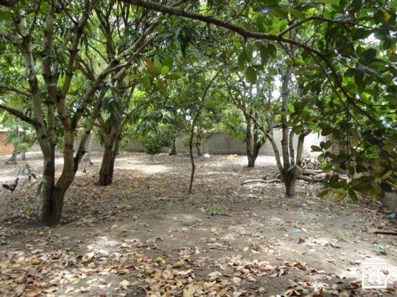 Terreno à venda - mosqueiro (zona de expansão) - Foto 10