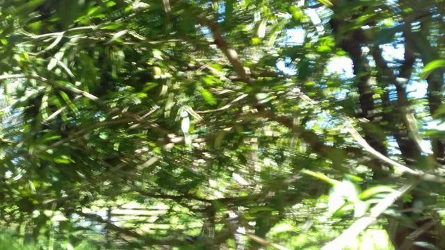 Sítio de 5 alqueires em Taquaral GO - Foto 12
