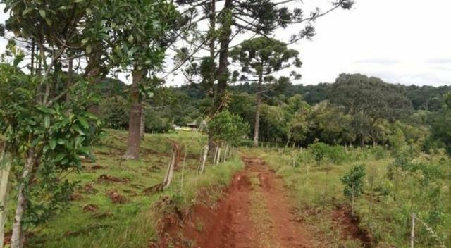 Vendo um alqueire de terra em Cantagalo - Foto 2