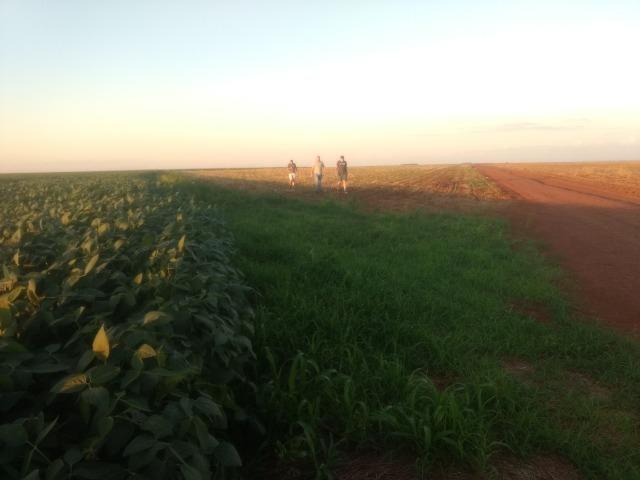 Alugo Fazenda p Arrendamento no Ms 1000 há - Foto 5