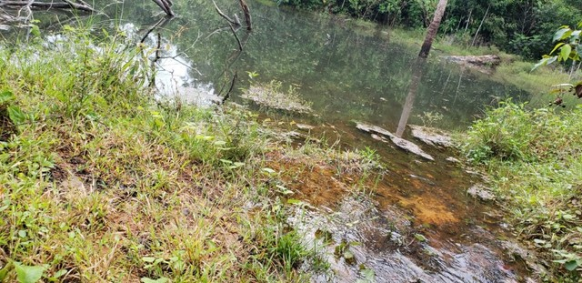 Fazenda 614 hectares documentada - Foto 4