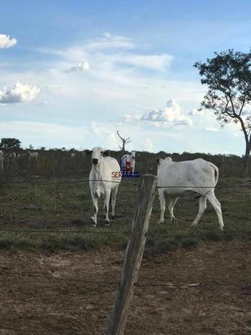 Fazenda a venda no estado do mato grosso - Foto 2