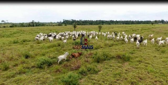 Excelente fazenda a venda nas proximidades da cidade de Ji-Paraná/RO - Foto 13