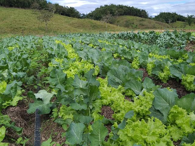 Hortaliças orgânicas