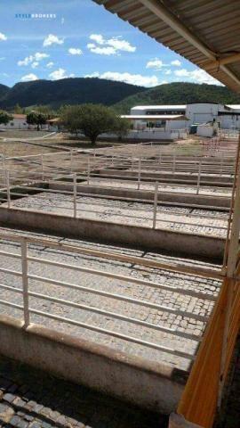 Fazenda no Estado da Bahia - Foto 17