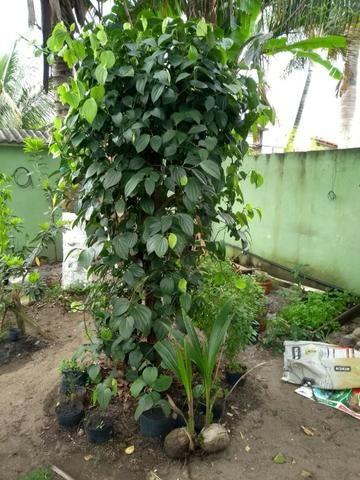 Mudas de Plantas e Hortaliças