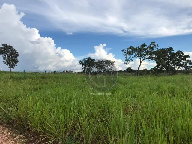 Sítio 11,8 ha na região distrito da guia