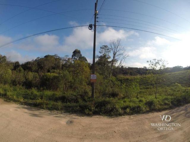 Área à venda, 5000 m² por r$ 800.000 - borda do campo - são josé dos pinhais/pr - Foto 2