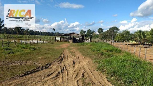 Fazenda com 140 Hectares em Candeias do Jamari/RO à venda, a 14 km da cidade - Foto 3