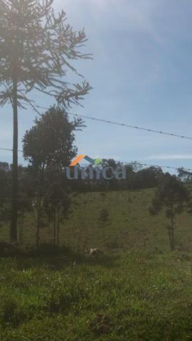 Campo alegre, campinas - Foto 2