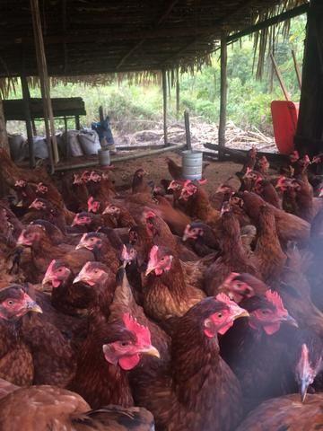 Fazenda no Vale do Jequiriçá - Foto 4
