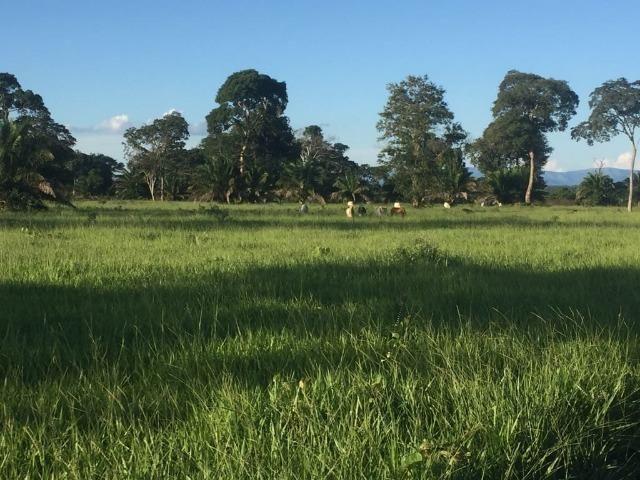 Fazenda 10593 hectares, sendo 7370 formado, terra de cultura - Foto 6