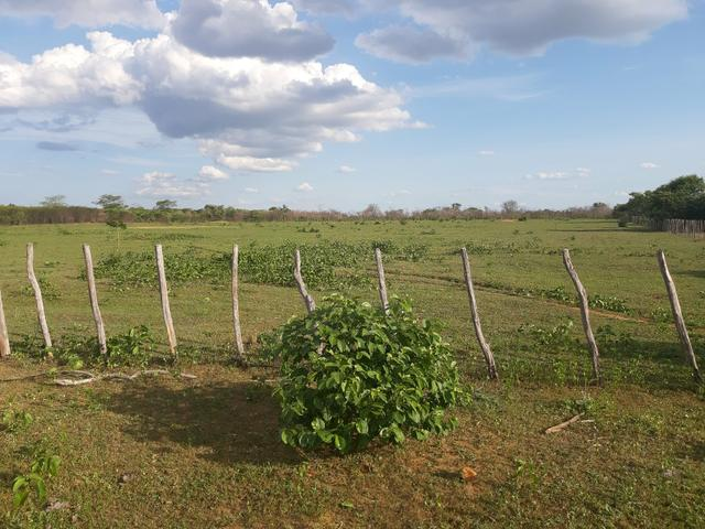Vendo fazenda em crateus ce ou troco - Foto 3