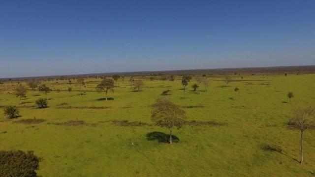 Fazenda 10593 hectares, sendo 7370 formado, terra de cultura - Foto 3