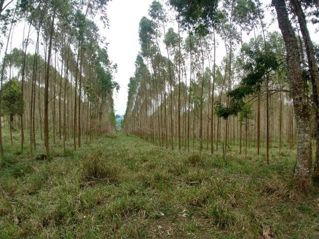 Fazenda em Campo Largo Bairro São Silvestre - Foto 15