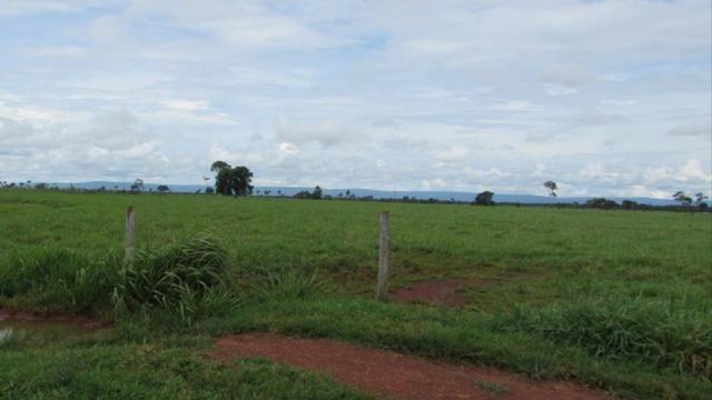 Fazenda 15000 hectares em vila bela, ha 60 km ponte e Lacerda - Foto 7