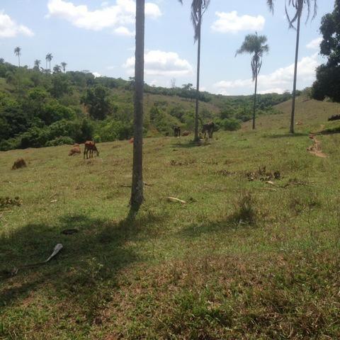 Fazenda caruru Valor R$ 1,400,000 - Foto 12