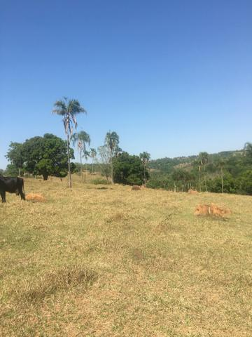 Fazenda caruru Valor R$ 1,400,000 - Foto 20