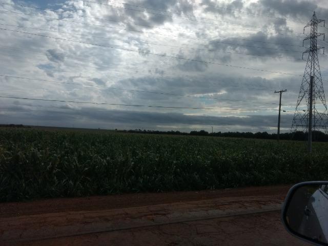 Alugo Fazenda p Arrendamento no Ms 1000 há - Foto 11